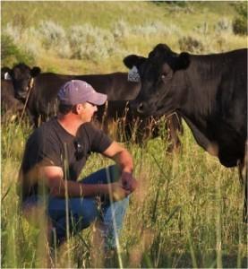 Montana-cattle-277x300